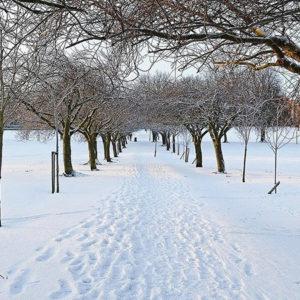 Winterliches Wandern und Spazieren bei 55plus. Gruppenaktivitäten