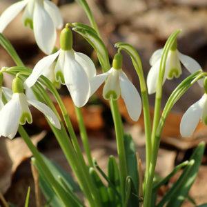 Wandern Frühjahr Blumen
