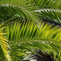 Audioandacht: Palmsonntag