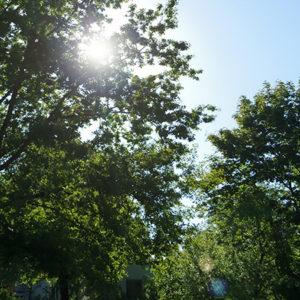 Gemeindewiese Eiche Sonnenschein